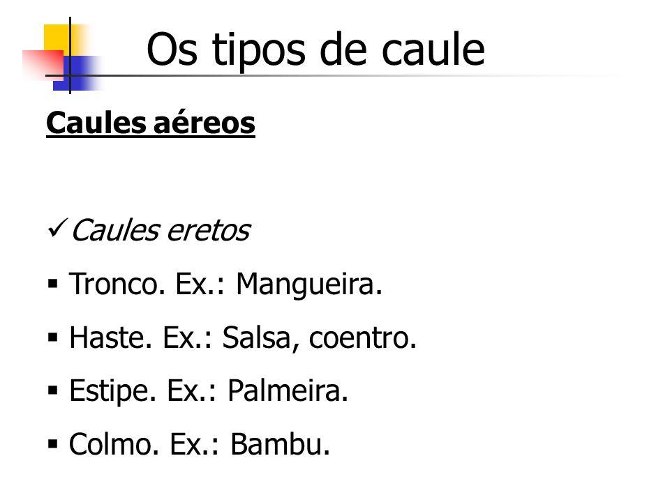 Os tipos de caule Caules aéreos Caules eretos Tronco. Ex.: Mangueira. Haste. Ex.: Salsa, coentro. Estipe. Ex.: Palmeira. Colmo. Ex.: Bambu.