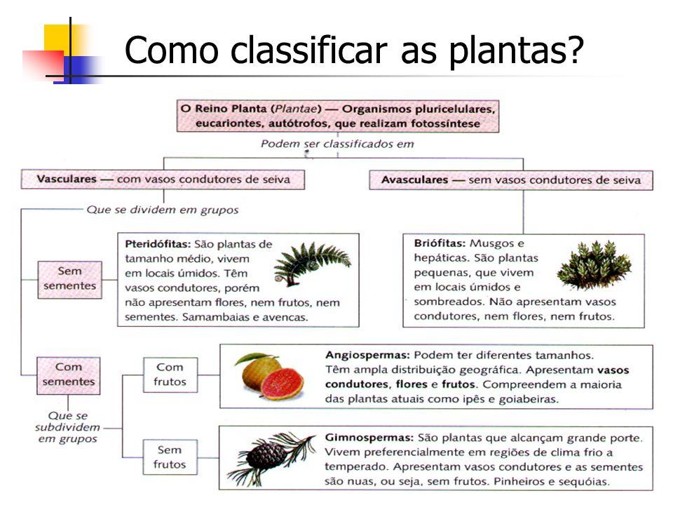 Como classificar as plantas?