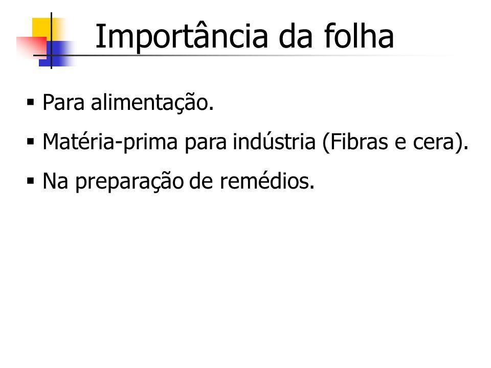 Importância da folha Para alimentação. Matéria-prima para indústria (Fibras e cera). Na preparação de remédios.