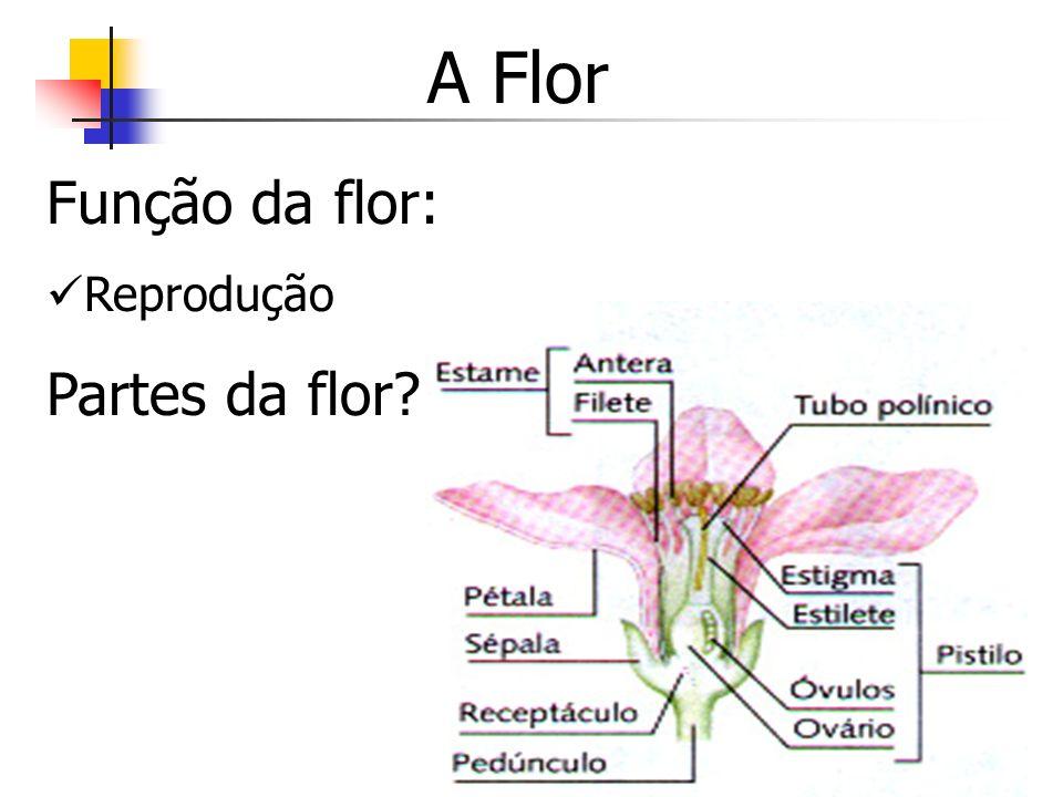 A Flor Função da flor: Reprodução Partes da flor?
