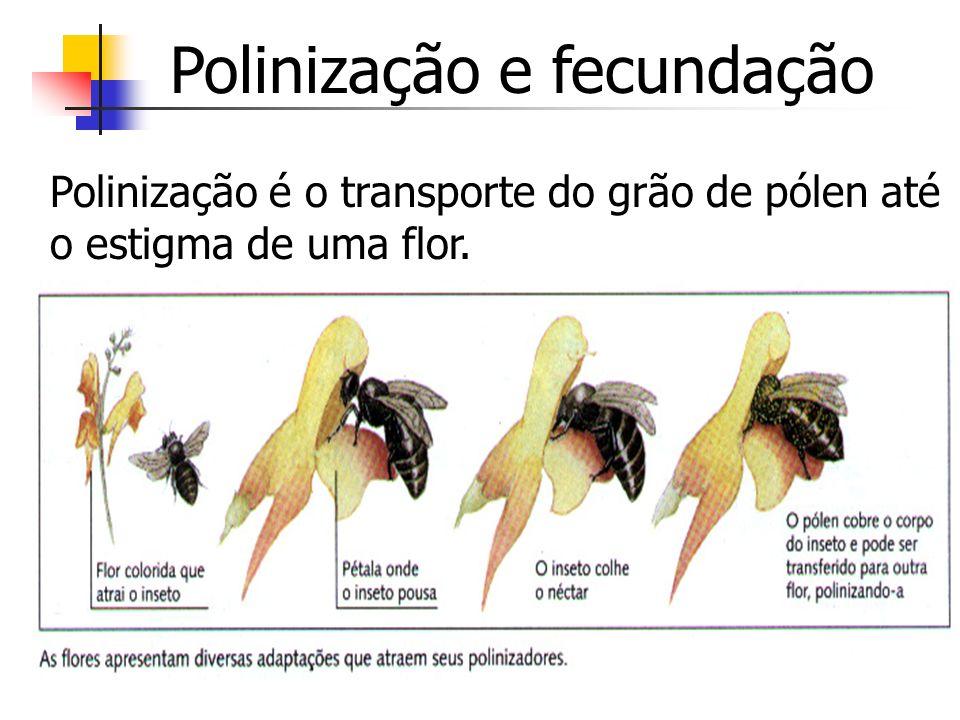 Polinização e fecundação Polinização é o transporte do grão de pólen até o estigma de uma flor.