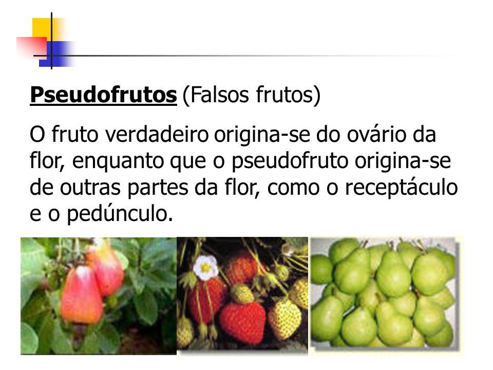 Pseudofrutos (Falsos frutos) O fruto verdadeiro origina-se do ovário da flor, enquanto que o pseudofruto origina-se de outras partes da flor, como o r