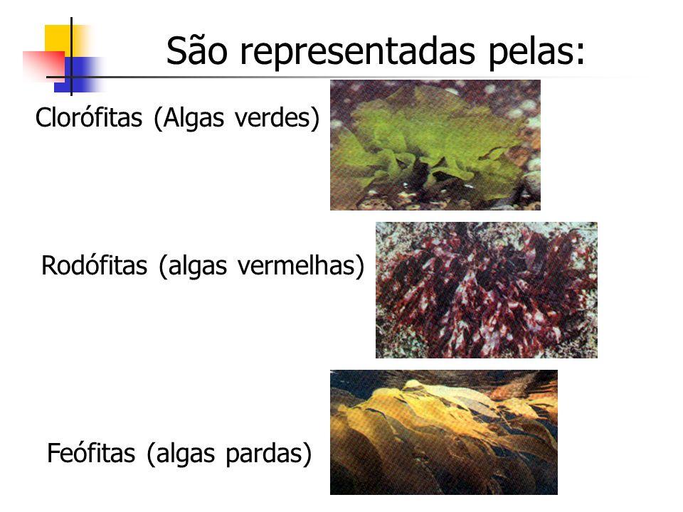 Clorófitas (Algas verdes) São representadas pelas: Feófitas (algas pardas) Rodófitas (algas vermelhas)