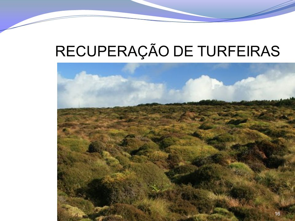 RECUPERAÇÃO DE TURFEIRAS 16