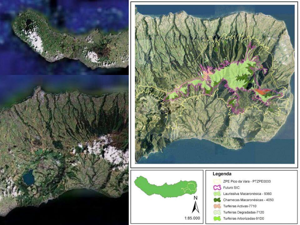 Priolo – Pyrrhula murina Godman, 1866 Endémico de São Miguel Limitado á floresta nativa Área de distribuição muito reduzida População estimada de 300 indivíduos Rápido declínio nos últimos anos Criticamente ameaçado(IUCN)