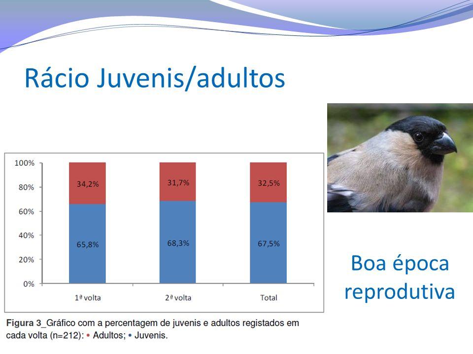 Rácio Juvenis/adultos Boa época reprodutiva