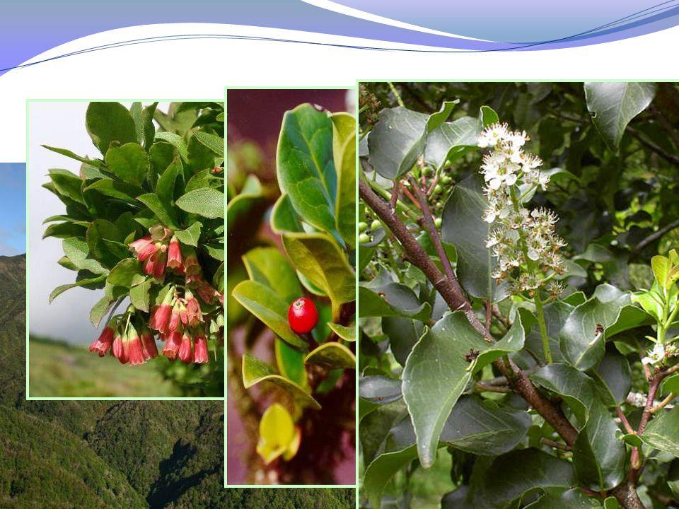 2003/2010 Produção e Plantação 83.000 plantas nativas produzidas 60.000 plantadas 83.000 plantas nativas produzidas 60.000 plantadas