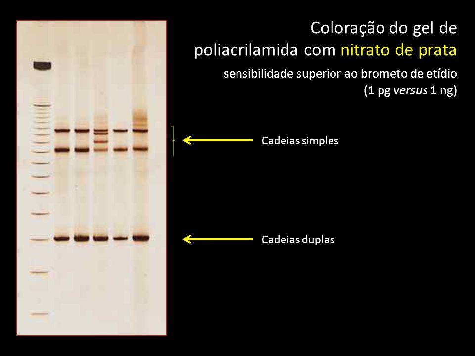 Cadeias simples Cadeias duplas Coloração do gel de poliacrilamida com nitrato de prata sensibilidade superior ao brometo de etídio (1 pg versus 1 ng)