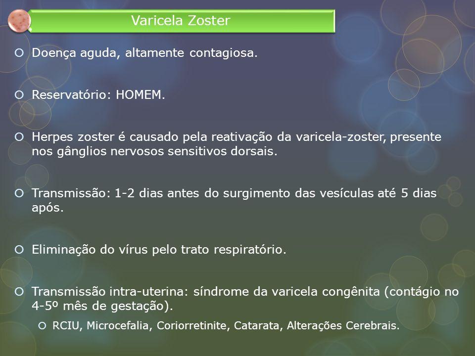 Doença aguda, altamente contagiosa. Reservatório: HOMEM. Herpes zoster é causado pela reativação da varicela-zoster, presente nos gânglios nervosos se