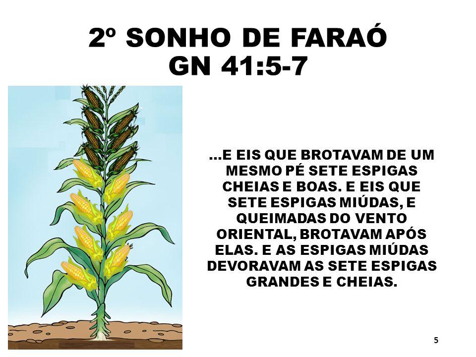 2º SONHO DE FARAÓ GN 41:5-7...E EIS QUE BROTAVAM DE UM MESMO PÉ SETE ESPIGAS CHEIAS E BOAS. E EIS QUE SETE ESPIGAS MIÚDAS, E QUEIMADAS DO VENTO ORIENT