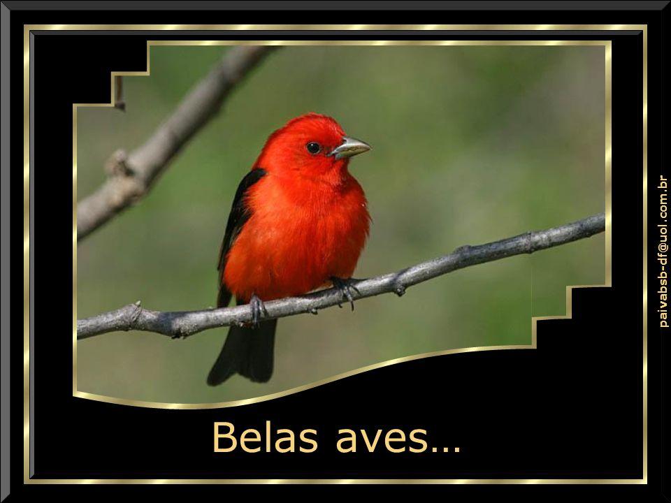 paivabsb-df@uol.com.br Não Crer em DEUS?!? Não Crer em DEUS?!?