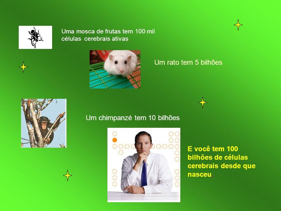 Uma mosca de frutas tem 100 mil células cerebrais ativas. Um rato tem 5 bilhões Um chimpanzé tem 10 bilhões E você tem 100 bilhões de células cerebrai