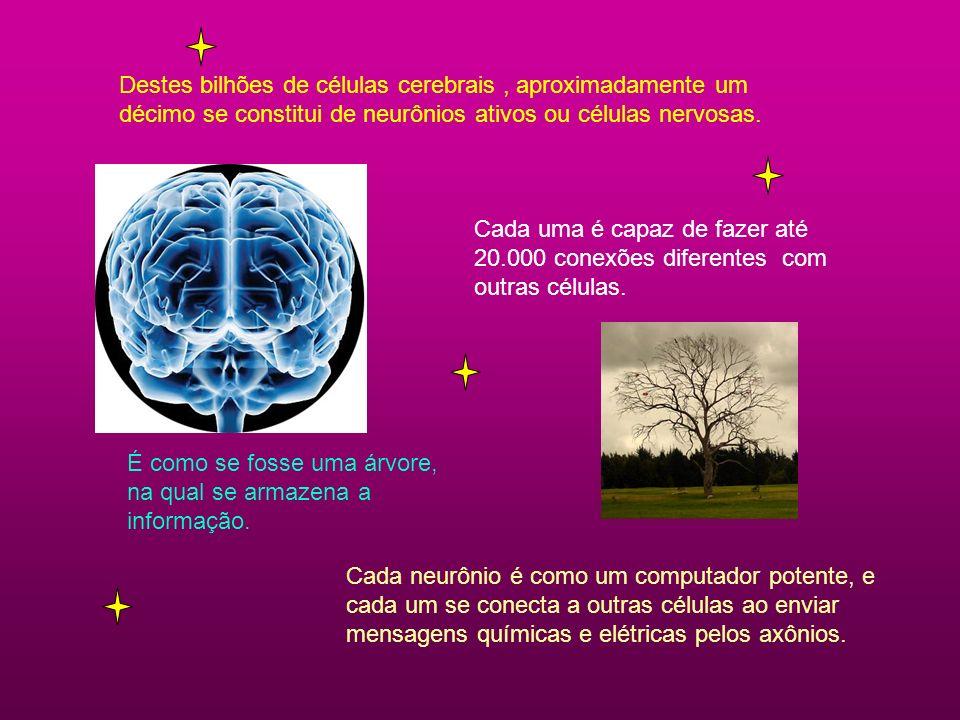 Destes bilhões de células cerebrais, aproximadamente um décimo se constitui de neurônios ativos ou células nervosas. Cada uma é capaz de fazer até 20.