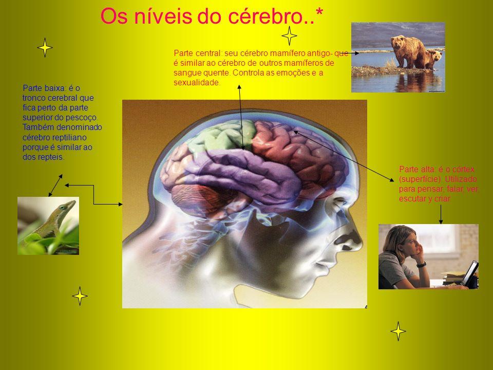Os níveis do cérebro..* Parte baixa: é o tronco cerebral que fica perto da parte superior do pescoço. Também denominado cérebro reptiliano porque é si
