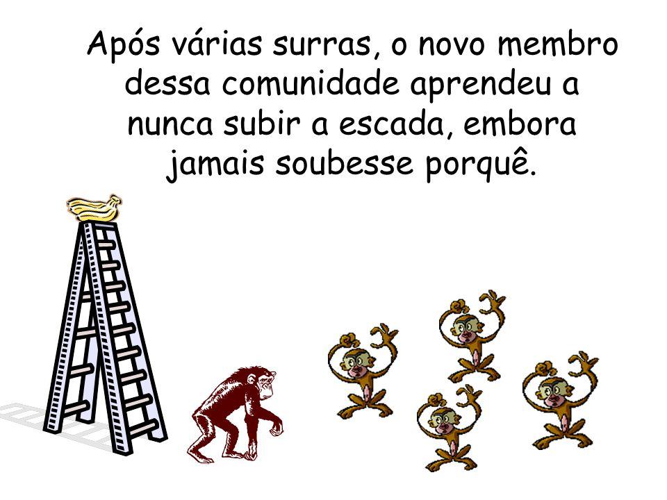 Os cientistas decidiram então substituir um dos macacos. A primeira coisa que o macaco novo fez foi tentar subir a escada. Imediatamente, os mais anti