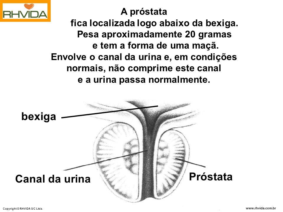 www.rhvida.com.br Copyright © RHVIDA S/C Ltda. bexiga A próstata fica localizada logo abaixo da bexiga. Pesa aproximadamente 20 gramas e tem a forma d