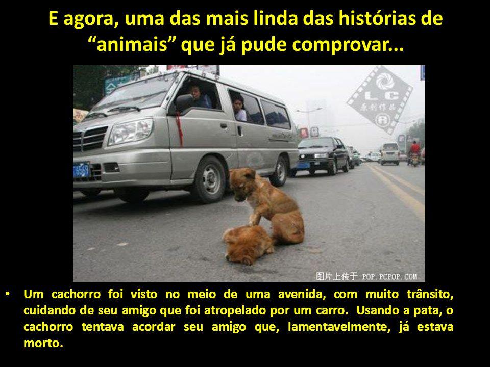 Gratidão. Uma imagem vale mais que mil palavras. Demonstração de gratidão desta cadela da raça Doberman, que havia sido salva pelo bombeiro em um incê