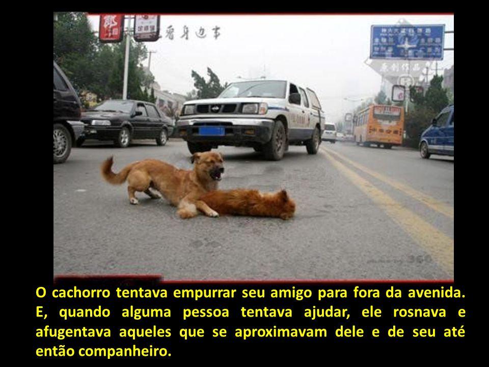E agora, uma das mais linda das histórias de animais que já pude comprovar... Um cachorro foi visto no meio de uma avenida, com muito trânsito, cuidan