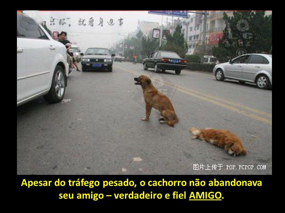 O cachorro tentava empurrar seu amigo para fora da avenida. E, quando alguma pessoa tentava ajudar, ele rosnava e afugentava aqueles que se aproximava