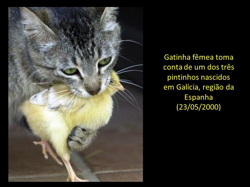 E agora, uma das mais linda das histórias de animais que já pude comprovar...