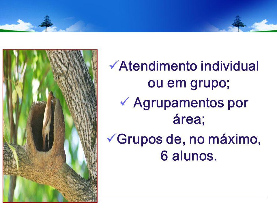 Atendimento individual ou em grupo; Agrupamentos por área; Grupos de, no máximo, 6 alunos.