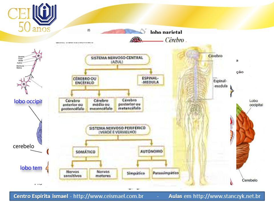 Sistema Nervoso SNVR Sistema Nervoso de Vida de Relação Nervo simpático e parassimpático SNVV Sistema Nervoso de Vida Vegetativa Centro Espírita ismae