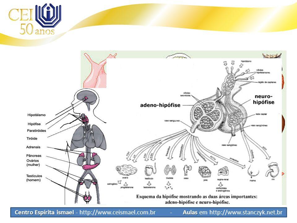 Sistema Endócrino Glândulas Exógenas Secretam substâncias fora do corpo Endocrinas Secretam substâncias dentro do corpo