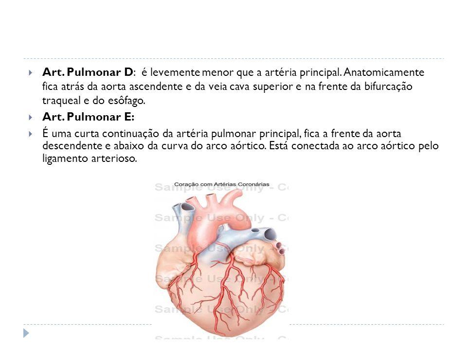 Art. Pulmonar D: é levemente menor que a artéria principal. Anatomicamente fica atrás da aorta ascendente e da veia cava superior e na frente da bifur