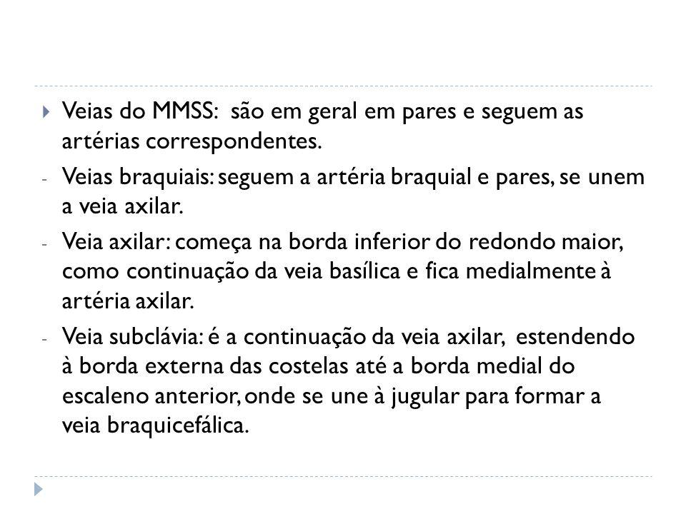 Veias do MMSS: são em geral em pares e seguem as artérias correspondentes. - Veias braquiais: seguem a artéria braquial e pares, se unem a veia axilar