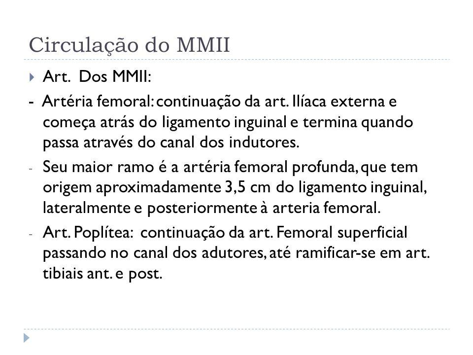 Circulação do MMII Art. Dos MMII: - Artéria femoral: continuação da art. Ilíaca externa e começa atrás do ligamento inguinal e termina quando passa at