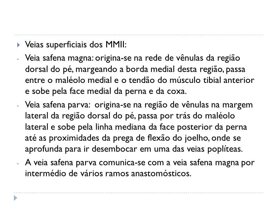 Veias superficiais dos MMII: - Veia safena magna: origina-se na rede de vênulas da região dorsal do pé, margeando a borda medial desta região, passa e
