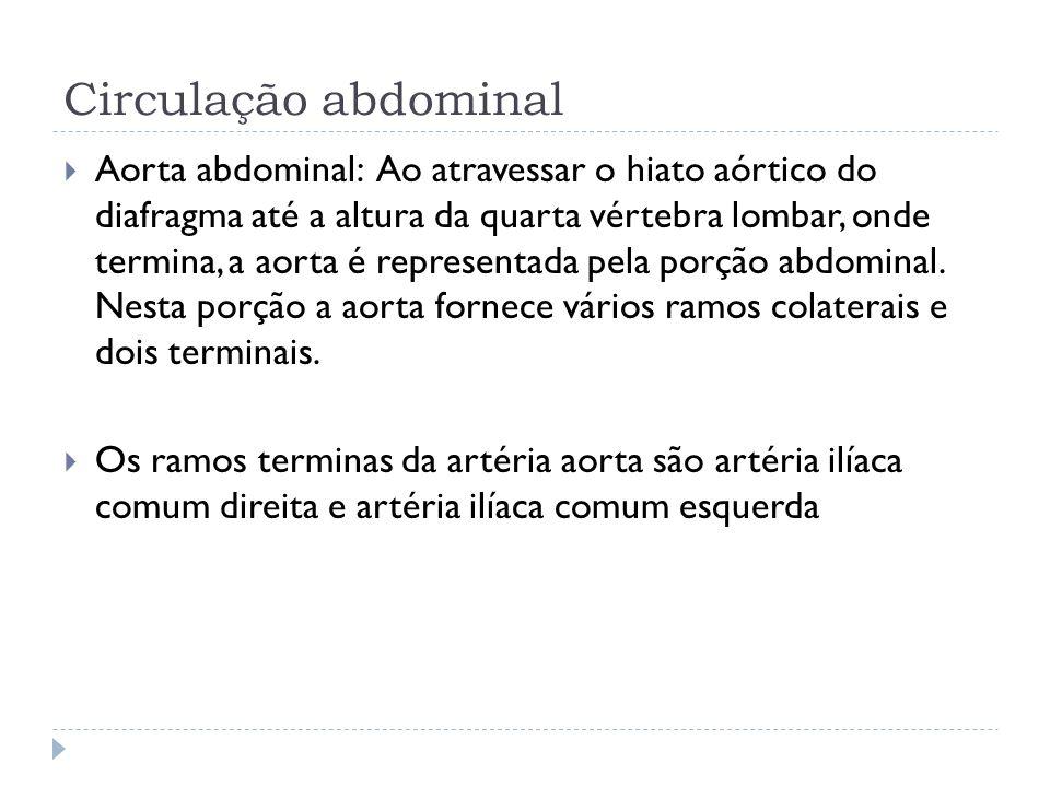 Circulação abdominal Aorta abdominal: Ao atravessar o hiato aórtico do diafragma até a altura da quarta vértebra lombar, onde termina, a aorta é repre