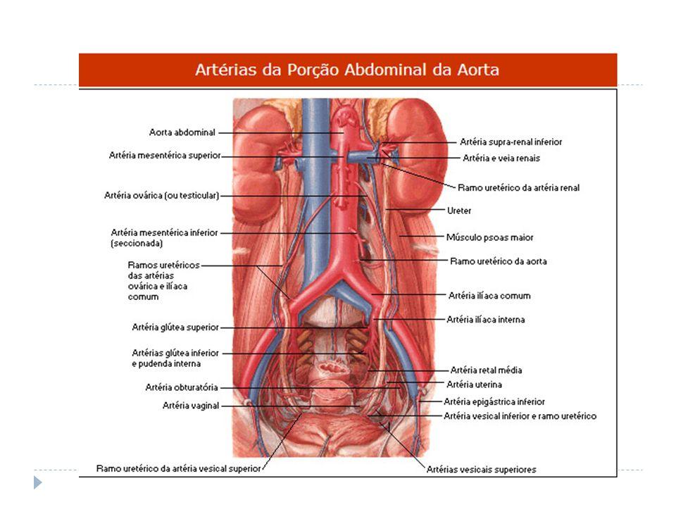 Fantástico Arteria Ilíaca Galería - Anatomía de Las Imágenesdel ...