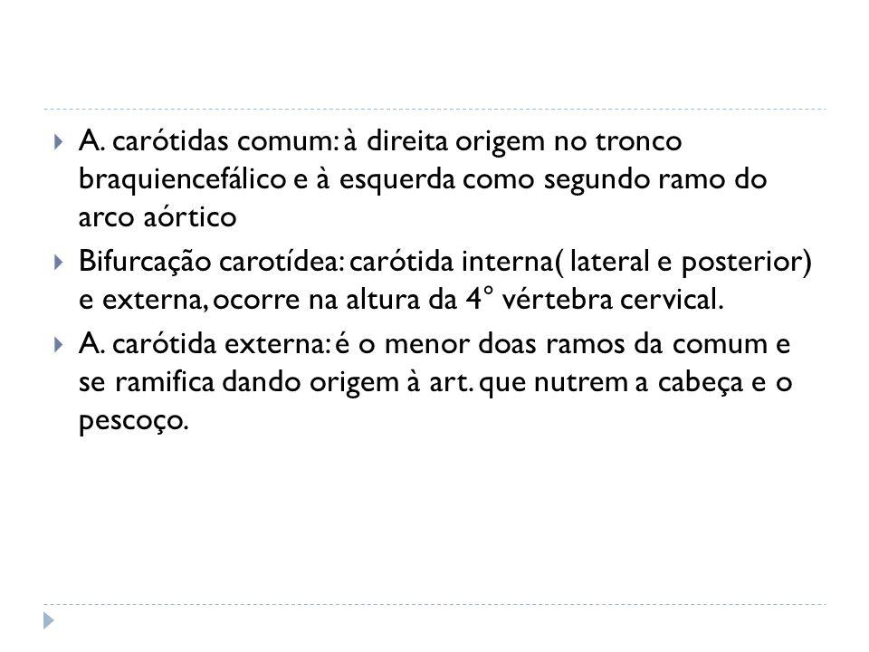 A. carótidas comum: à direita origem no tronco braquiencefálico e à esquerda como segundo ramo do arco aórtico Bifurcação carotídea: carótida interna(