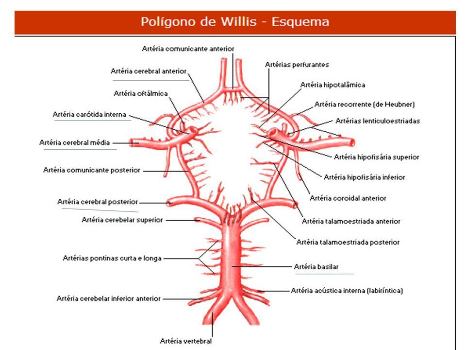Circulação do MMSS Artéria subclávia (direita ou esquerda), logo após o seu início, origina a artéria vertebral que vai auxiliar na vascularização cerebral, descendo em direção a axila recebe o nome de artéria axilar, e quando, finalmente atinge o braço, seu nome muda para artéria braquial (umeral).