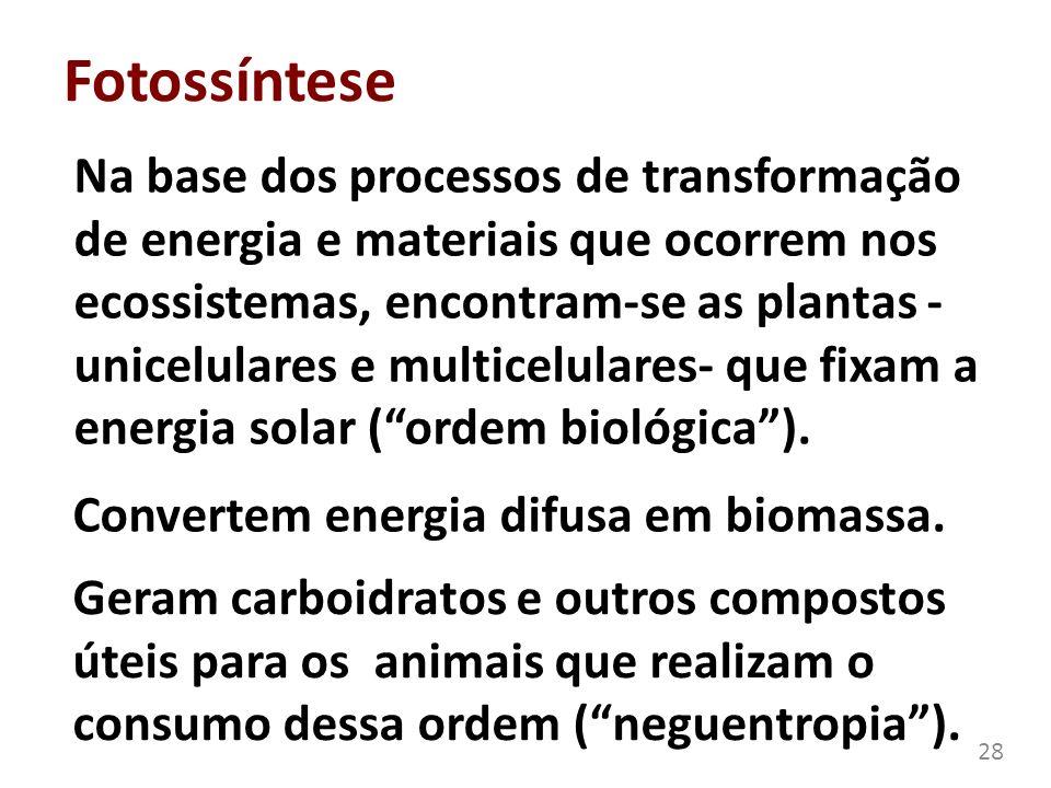 Fotossíntese Na base dos processos de transformação de energia e materiais que ocorrem nos ecossistemas, encontram-se as plantas - unicelulares e mult