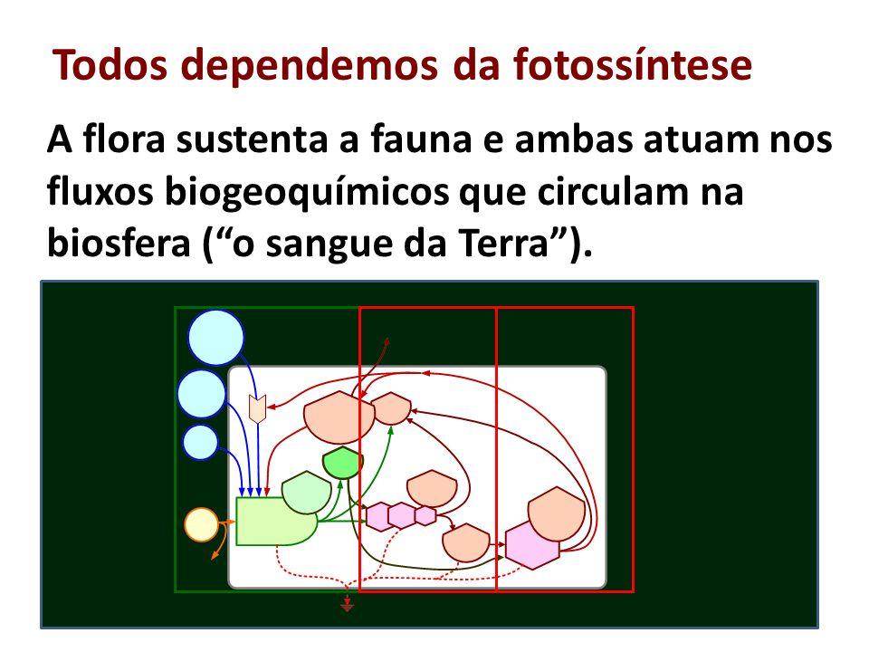 Todos dependemos da fotossíntese A flora sustenta a fauna e ambas atuam nos fluxos biogeoquímicos que circulam na biosfera (o sangue da Terra). 29 Flu
