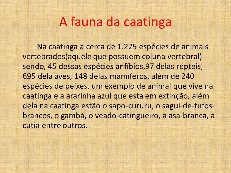 A fauna da caatinga Na caatinga a cerca de 1.225 espécies de animais vertebrados(aquele que possuem coluna vertebral) sendo, 45 dessas espécies anfíbios,97 delas répteis, 695 dela aves, 148 delas mamíferos, além de 240 espécies de peixes, um exemplo de animal que vive na caatinga e a ararinha azul que esta em extinção, além dela na caatinga estão o sapo-cururu, o sagui-de-tufos- brancos, o gambá, o veado-catingueiro, a asa-branca, a cutia entre outros.