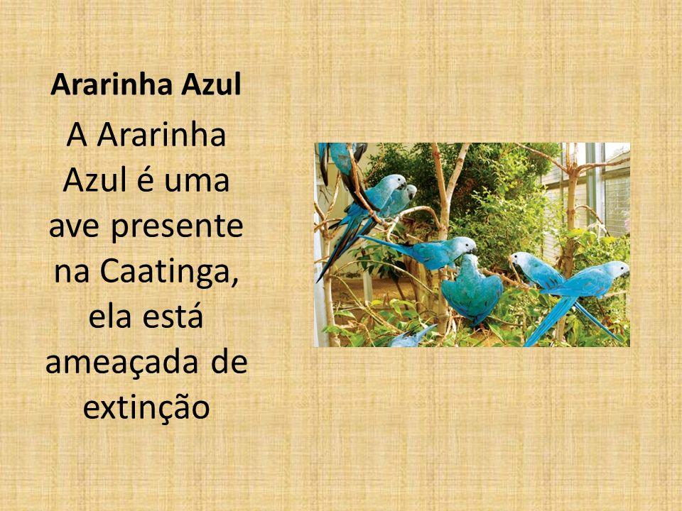 Ararinha Azul A Ararinha Azul é uma ave presente na Caatinga, ela está ameaçada de extinção