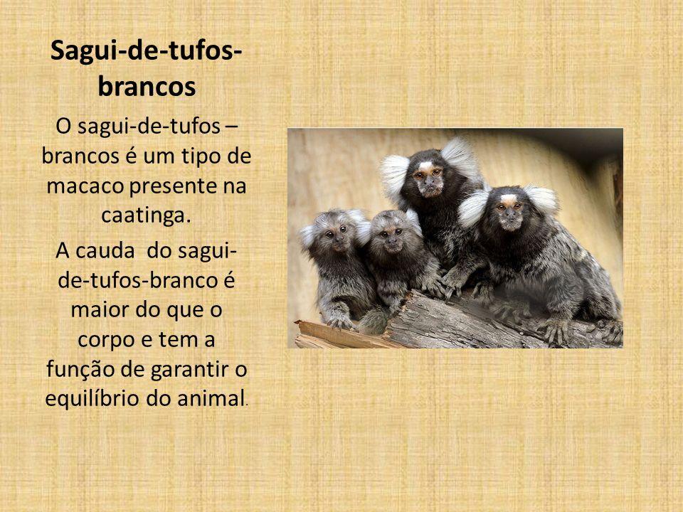 Sagui-de-tufos- brancos O sagui-de-tufos – brancos é um tipo de macaco presente na caatinga.