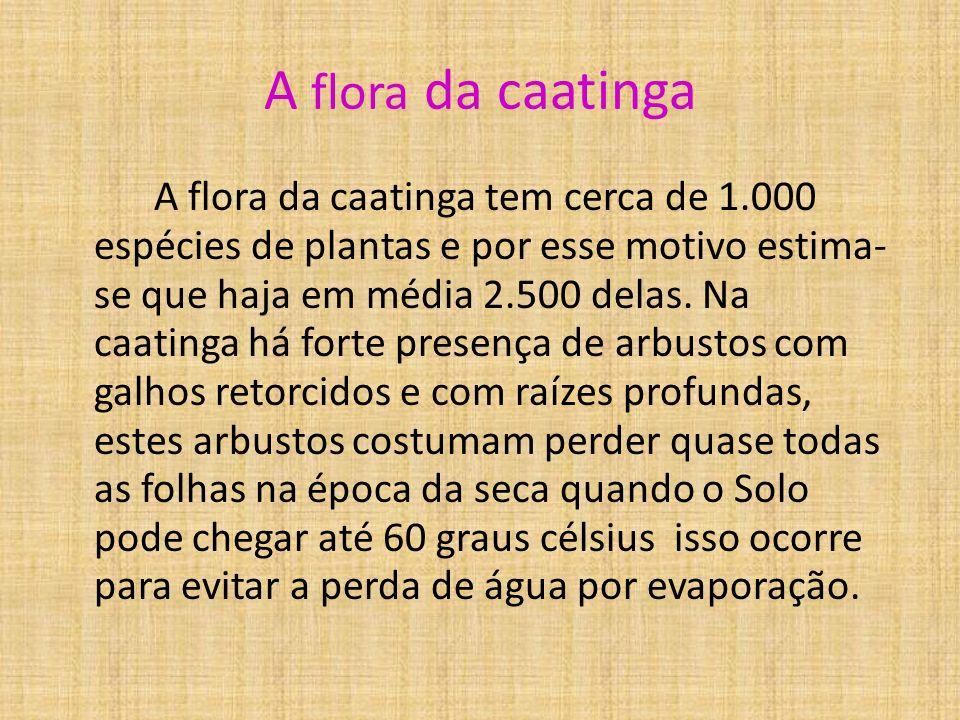 A flora da caatinga A flora da caatinga tem cerca de 1.000 espécies de plantas e por esse motivo estima- se que haja em média 2.500 delas.