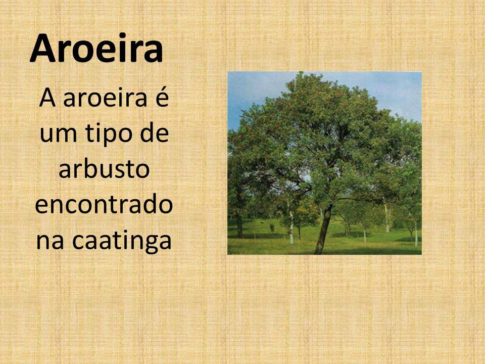 Aroeira A aroeira é um tipo de arbusto encontrado na caatinga