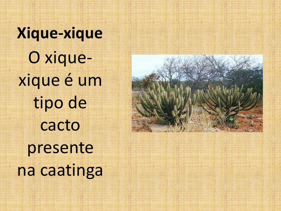 Xique-xique O xique- xique é um tipo de cacto presente na caatinga