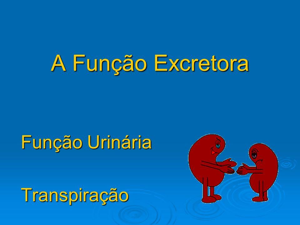 A Função Excretora Função Urinária Transpiração
