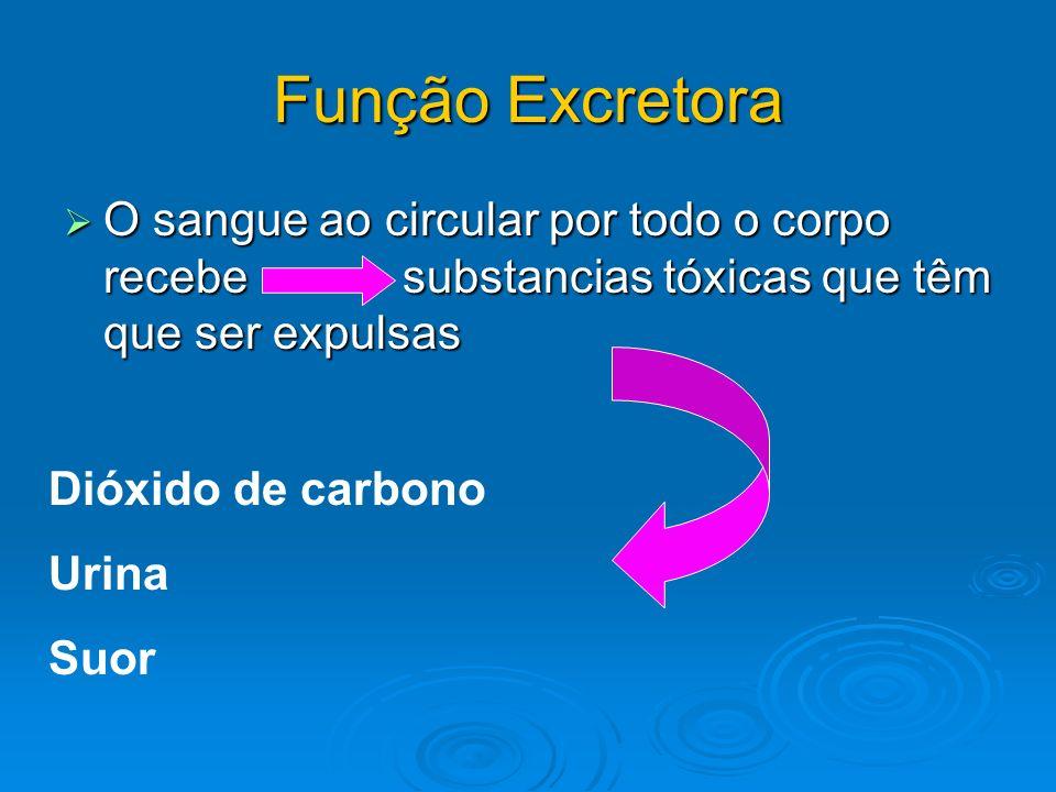 Função Excretora O sangue ao circular por todo o corpo recebe substancias tóxicas que têm que ser expulsas Dióxido de carbono Urina Suor