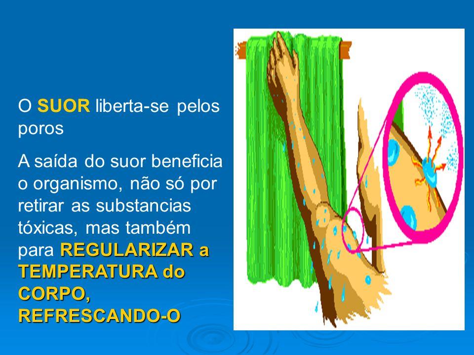 O SUOR liberta-se pelos poros A saída do suor beneficia o organismo, não só por retirar as substancias tóxicas, mas também para R RR REGULARIZAR a TEM