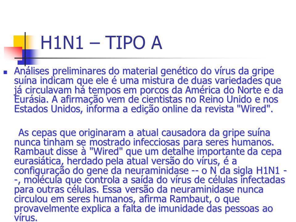 H1N1 – TIPO A Análises preliminares do material genético do vírus da gripe suína indicam que ele é uma mistura de duas variedades que já circulavam há