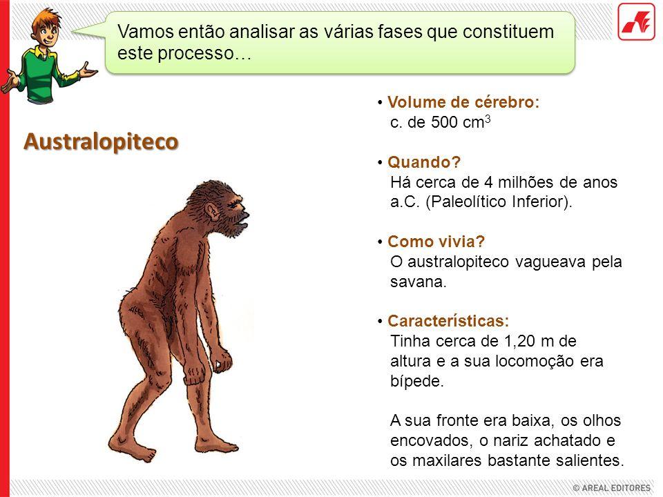 Volume de cérebro: c. de 500 cm 3 Quando? Há cerca de 4 milhões de anos a.C. (Paleolítico Inferior). Como vivia? O australopiteco vagueava pela savana