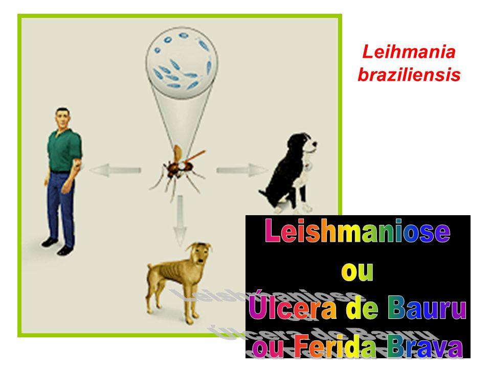 Leihmania braziliensis