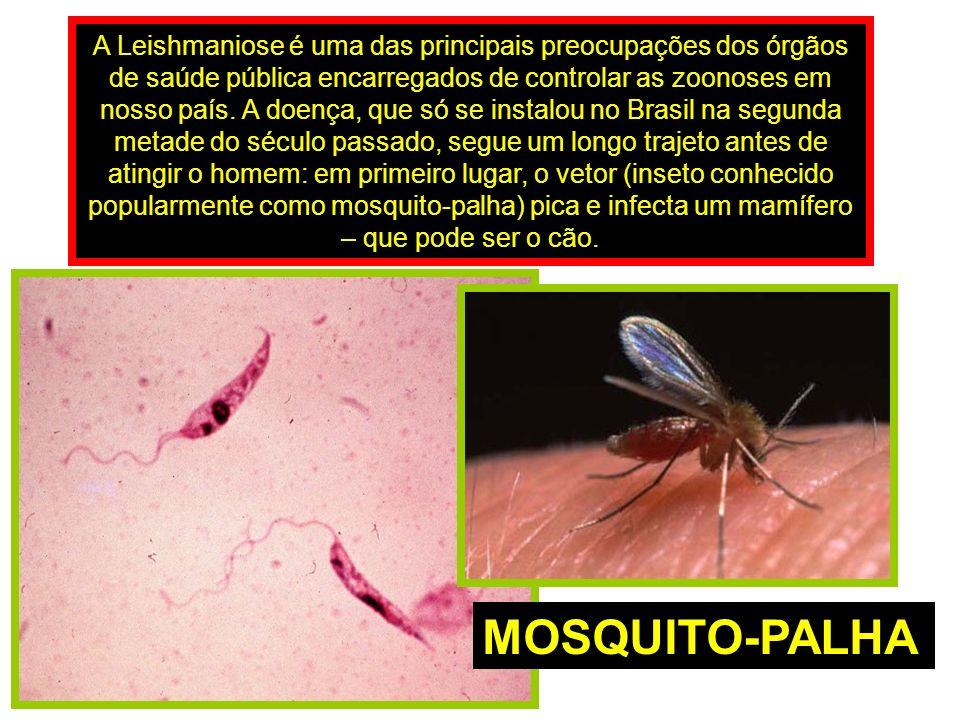 A Leishmaniose é uma das principais preocupações dos órgãos de saúde pública encarregados de controlar as zoonoses em nosso país.